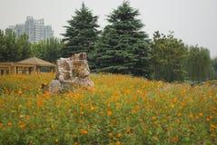 Piedra en la flor Imágenes de archivo libres de regalías