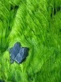 Piedra en musgo Foto de archivo libre de regalías