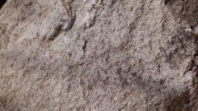 Piedra gris Imágenes de archivo libres de regalías