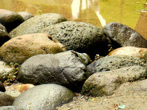 Piedra mojada después de la lluvia Foto de archivo