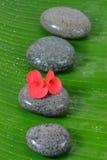Piedra mojada y flor roja Fotos de archivo