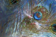 Piedra preciosa del pavo real Foto de archivo