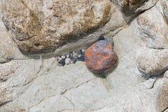 Piedra redondeada coloreada inusual en un charco cristalino del agua Imagenes de archivo