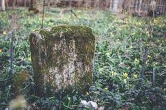 Piedra sepulcral antigua o grave demasiado grande para su edad con el musgo en cementerio abandonado y olvidado Imágenes de archivo libres de regalías