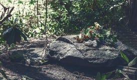 Piedra sepulcral gris oscuro grande Fotos de archivo