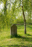 Piedra sepulcral vieja debajo de un abedul Fotos de archivo libres de regalías