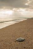 Piedra solitaria Fotos de archivo libres de regalías