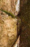 Piedra y árbol Imágenes de archivo libres de regalías