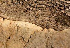 Piedra y árbol Fotos de archivo libres de regalías