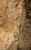 Piedra y árbol Foto de archivo libre de regalías