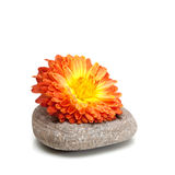 Piedra y flor Foto de archivo libre de regalías