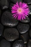 Piedra y flor Imágenes de archivo libres de regalías