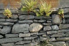 Piedra y helecho Foto de archivo libre de regalías