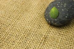 Piedra y hoja del zen foto de archivo libre de regalías