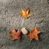Piedra y hojas de arce amarillas secadas Fotos de archivo libres de regalías