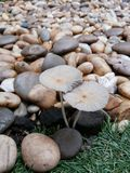 Piedra y la seta Imágenes de archivo libres de regalías