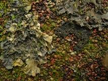 Piedra y liquen Foto de archivo libre de regalías