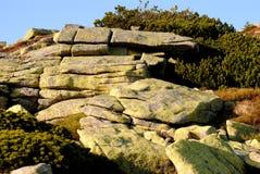 Piedra y pino en el ¡e de KrkonoÅ fotografía de archivo