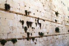 Piedra y vegetación occidentales de la pared Imágenes de archivo libres de regalías