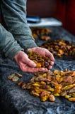 Piedras ambarinas, manos humanas que sostienen las piedras ambarinas Fotos de archivo