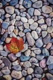 Piedras azules de la hoja anaranjada Fotos de archivo libres de regalías