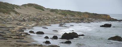 Piedras Blancas Elephant Seal Rookery near San Simeon, California Stock Image