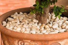 Piedras blancas en potes Foto de archivo libre de regalías