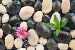 Piedras blancos y negros con las hojas y la flor Fotos de archivo