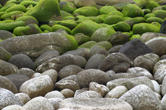 Piedras con el musgo imagen de archivo