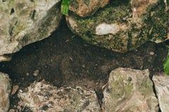 Piedras con el musgo tierra y piedras negras imagenes de archivo