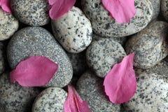 Piedras con los pétalos de la flor Foto de archivo