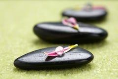 Piedras con los pétalos de la flor Imagen de archivo libre de regalías