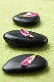 Piedras con los pétalos de la flor Fotos de archivo libres de regalías