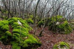 Piedras cubiertas con el musgo Imagen de archivo libre de regalías