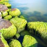 Piedras cubiertas de musgo de la costa Foto de archivo