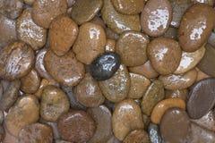 Piedras de la grava del primer para el piso decorativo Imagen de archivo libre de regalías