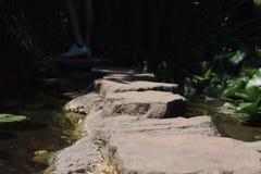 Piedras de Newstead Abbey Gardens Stepping Fotografía de archivo