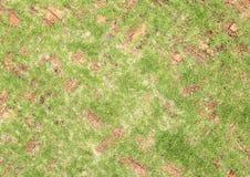 Piedras de pavimentación viejas del ladrillo rojo con la hierba que crece adelante Imágenes de archivo libres de regalías