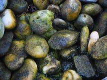 Piedras debajo del agua con el musgo Foto de archivo libre de regalías
