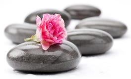 Piedras del balneario con la flor color de rosa imágenes de archivo libres de regalías