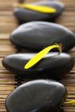 Piedras del balneario con los pétalos de la flor Fotografía de archivo libre de regalías