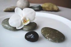Piedras del balneario y flor de la orquídea fotografía de archivo libre de regalías