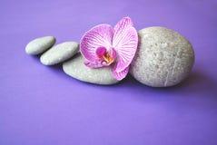 Piedras del balneario y flor de la orquídea fotografía de archivo