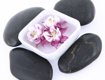 Piedras del balneario y flor flotante foto de archivo libre de regalías