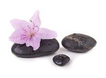 Piedras del balneario y flor tropical Imagenes de archivo