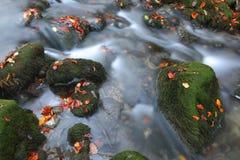 Piedras del río, moss-grown y el río Fotografía de archivo