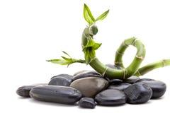 Piedras del zen con la planta de bambú Fotos de archivo