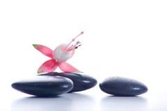 Piedras del zen con las flores rosadas Imagenes de archivo
