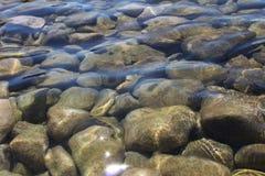 Piedras en el mar Imagen de archivo