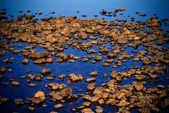 Piedras en la agua costera Fotografía de archivo